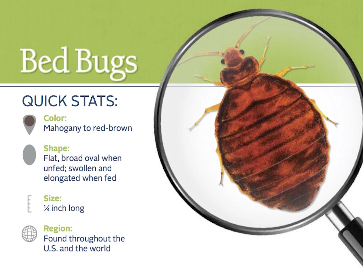 Bed Bug Mattress Covers To Kill Bugs