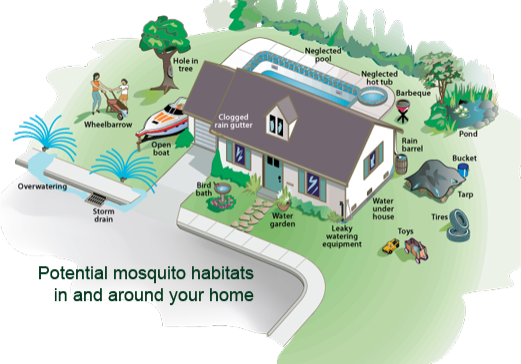 Where to look for mosquitos